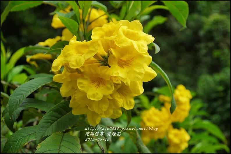 2015-05-黃鐘花1.jpg
