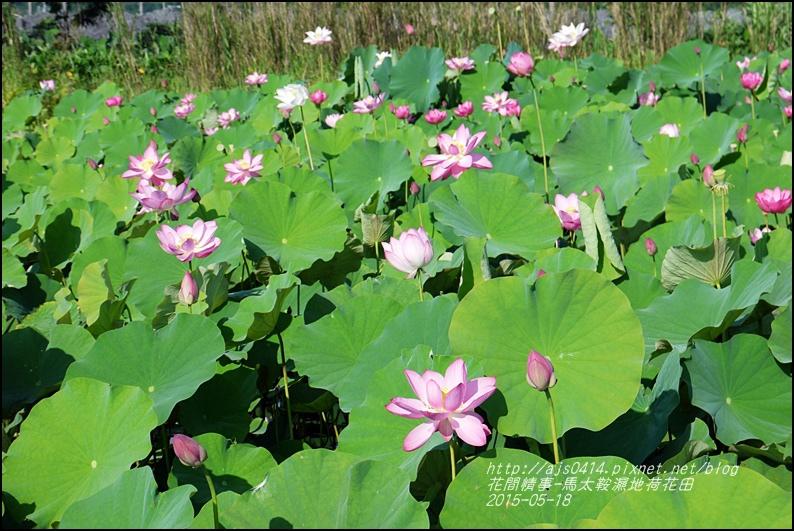 2015-05-馬太鞍濕地荷花池36.jpg