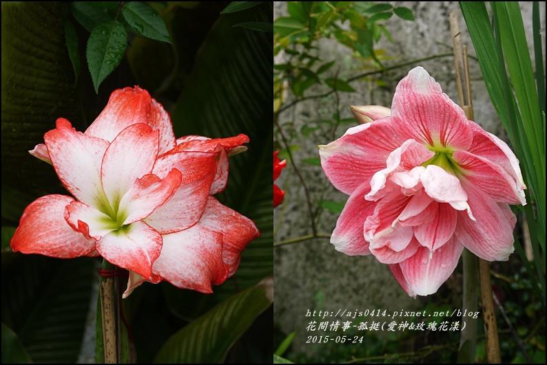 2015-05-愛神&玫瑰花漾.jpg