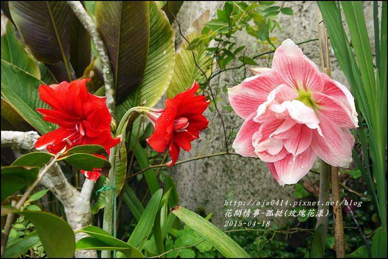 2015-05-孤挺(玫瑰花漾)3.jpg