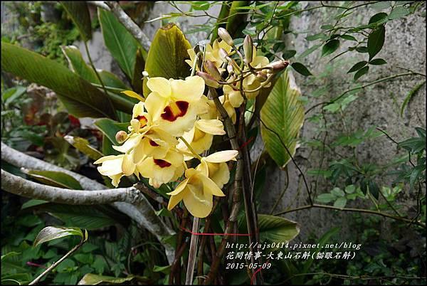 2015-06-大東山石斛(貓眼石斛)5.jpg