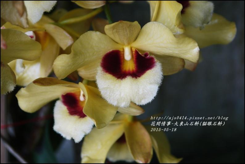 2015-06-大東山石斛(貓眼石斛)9.jpg