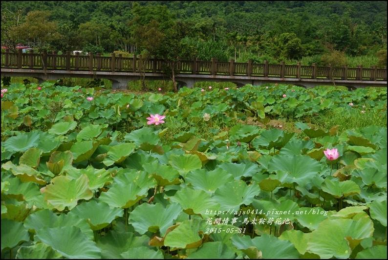 2015-06-馬太鞍荷花池4.jpg