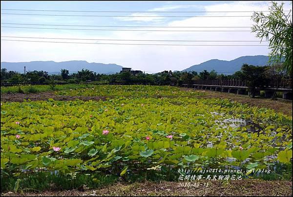 2015-06-馬太鞍荷花池7.jpg