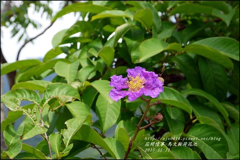 2015-06-馬太鞍荷花池18.jpg