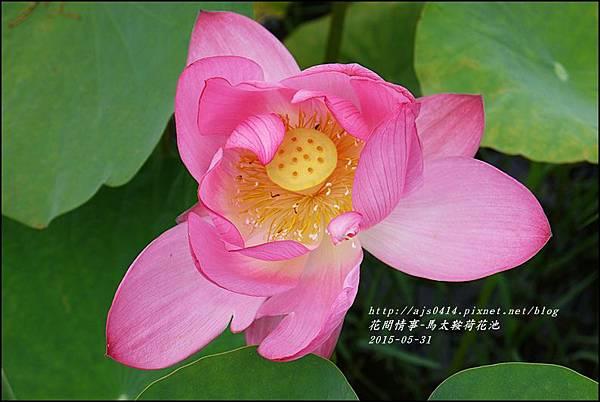 2015-06-馬太鞍荷花池29.jpg