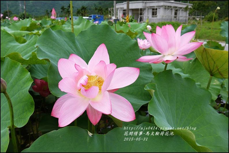 2015-06-馬太鞍荷花池28.jpg