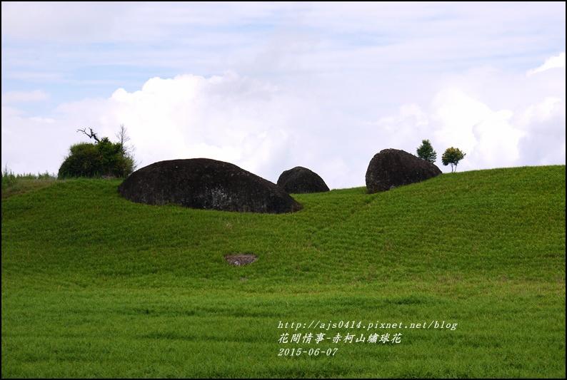 2015-06-赤柯山繡球花1.jpg