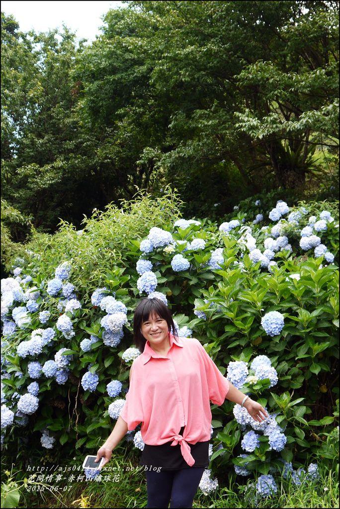 2015-06-赤柯山繡球花60.jpg