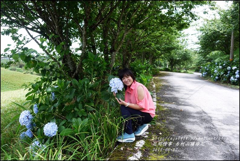 2015-06-赤柯山繡球花4.jpg