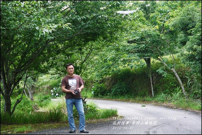 2015-06-赤柯山繡球花7.jpg