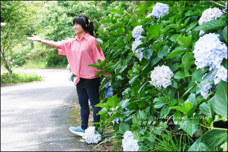 2015-06-赤柯山繡球花14.jpg
