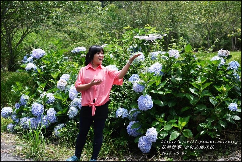 2015-06-赤柯山繡球花16.jpg
