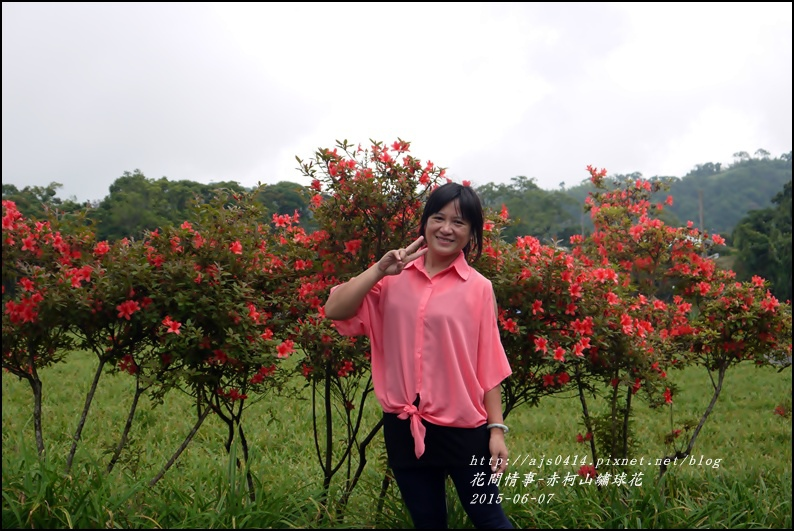 2015-06-赤柯山繡球花26.jpg
