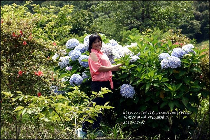 2015-06-赤柯山繡球花33.jpg