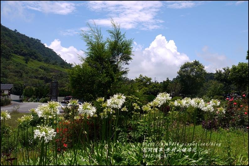 2015-06-赤柯山繡球花41.jpg