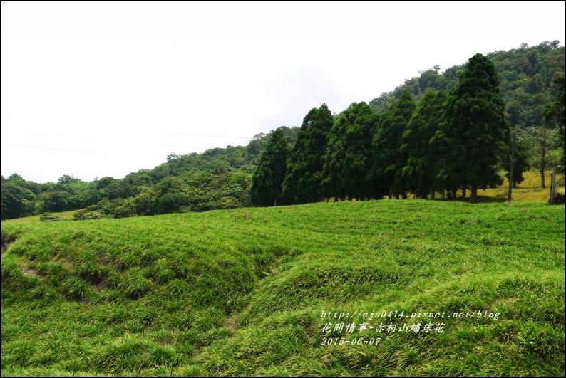 2015-06-赤柯山繡球花44.jpg