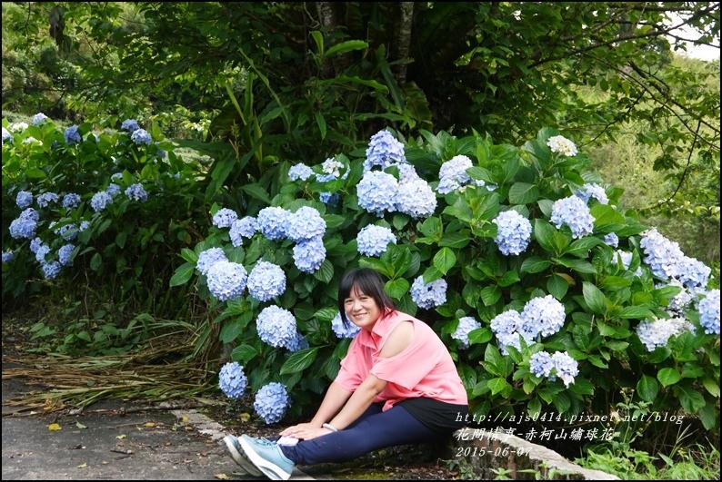 2015-06-赤柯山繡球花47.jpg