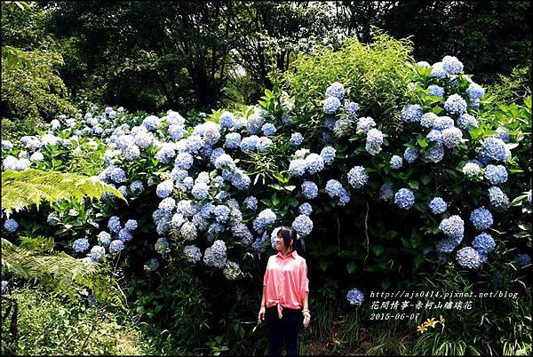 2015-06-赤柯山繡球花49.jpg