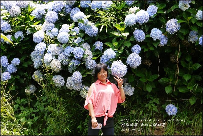 2015-06-赤柯山繡球花50.jpg
