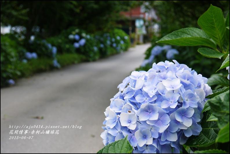 2015-06-赤柯山繡球花54.jpg