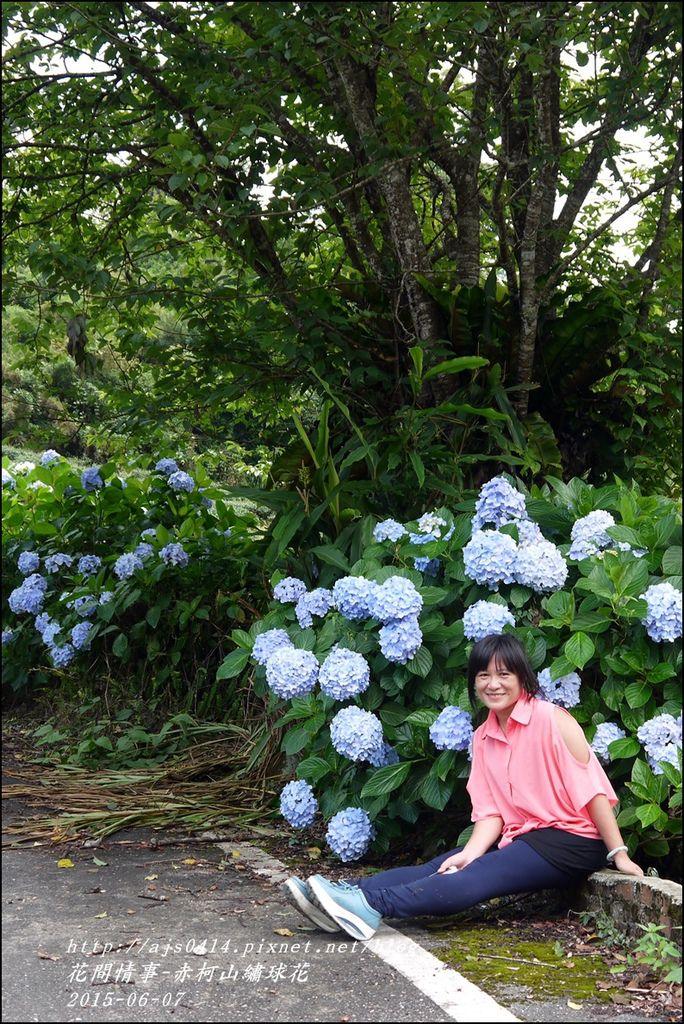2015-06-赤柯山繡球花58.jpg