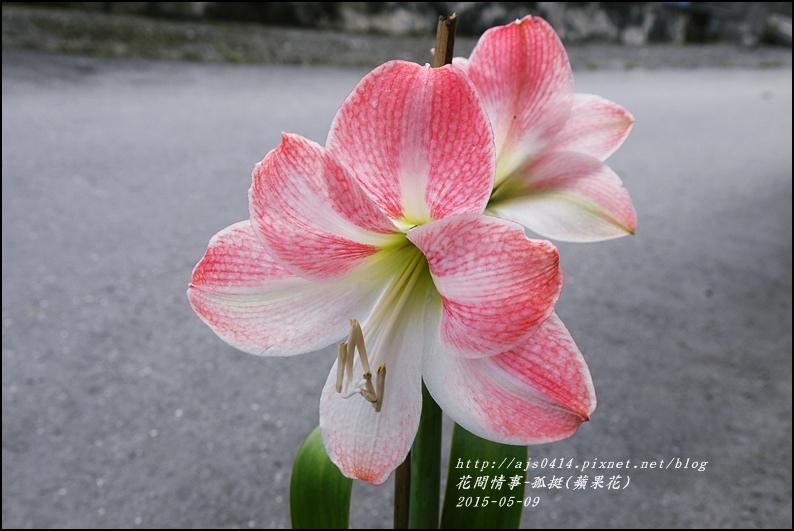 2015-06-孤挺(蘋果花)2.jpg