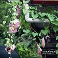 2015-06-煙斗藤15.jpg