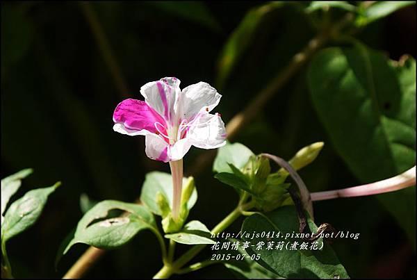 2015-07-紫苿莉(煮飯花)10.jpg