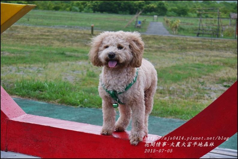 2015-07-大農大富平地森林2.jpg