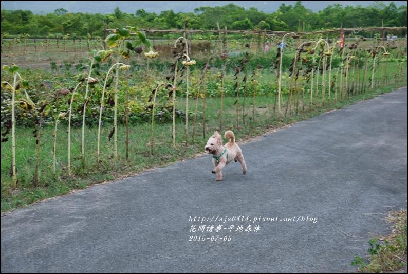 2015-07-大農大富平地森林26.jpg
