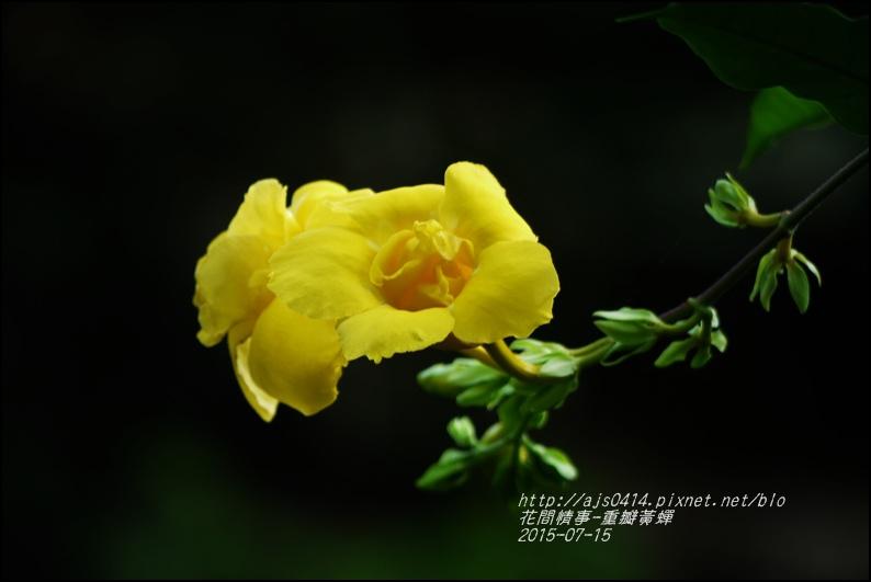 2015-07-重瓣黃蟬10.jpg