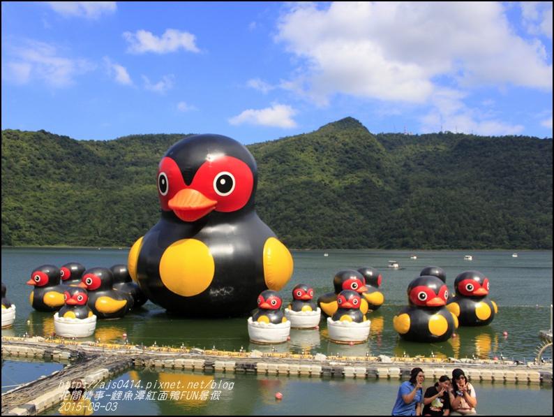 2015-鯉魚潭紅面鴨FUN暑假20.jpg