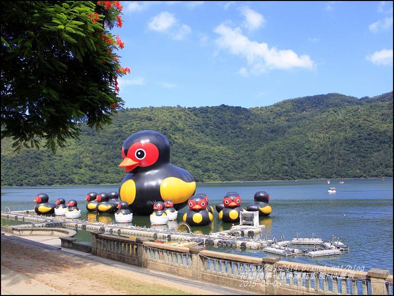 2015-鯉魚潭紅面鴨FUN暑假19.jpg