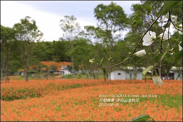 2015-赤柯山金針花季40.jpg
