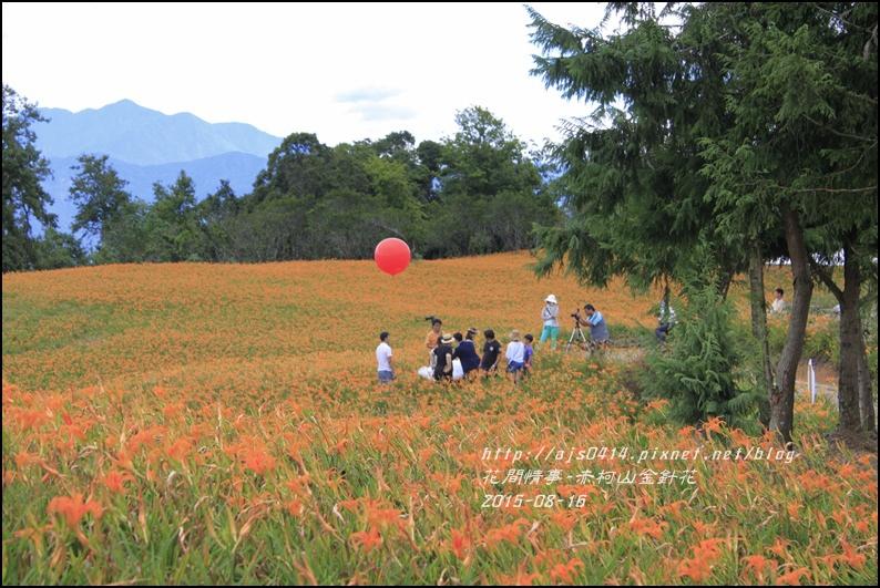 2015-赤柯山金針花季7.jpg