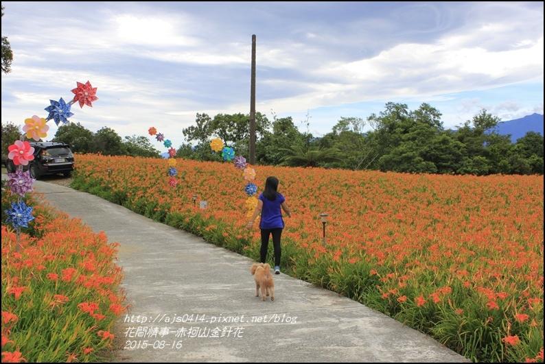 2015-赤柯山金針花季15.jpg
