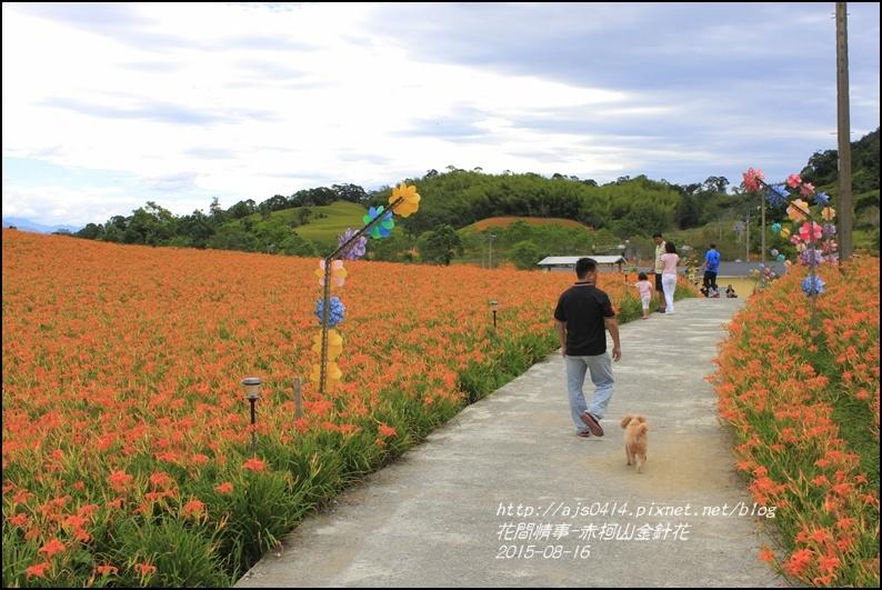 2015-赤柯山金針花季19.jpg