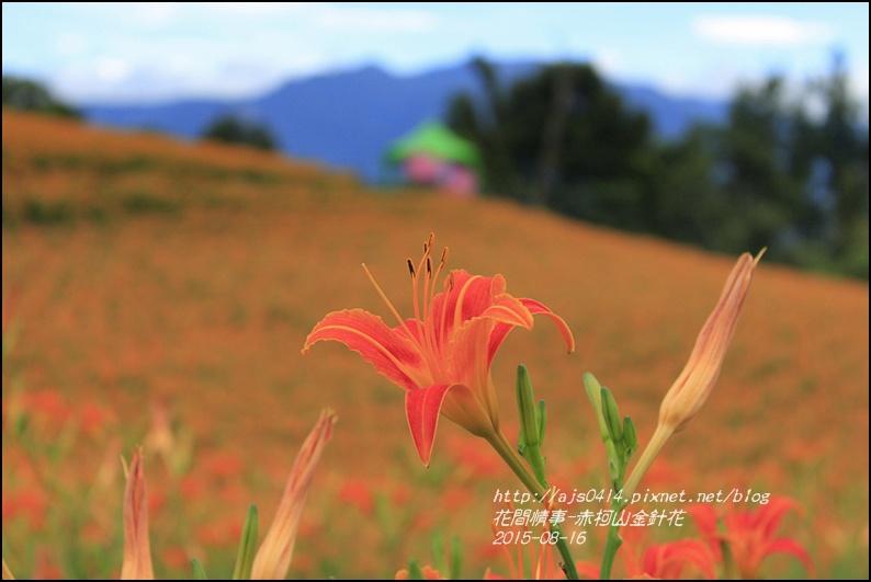 2015-赤柯山金針花季23.jpg