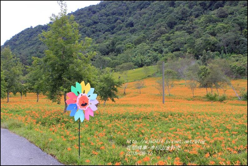 2015-赤柯山金針花季28.jpg