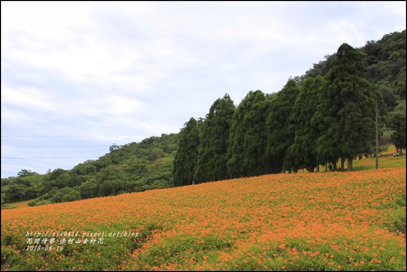 2015-赤柯山金針花季62.jpg