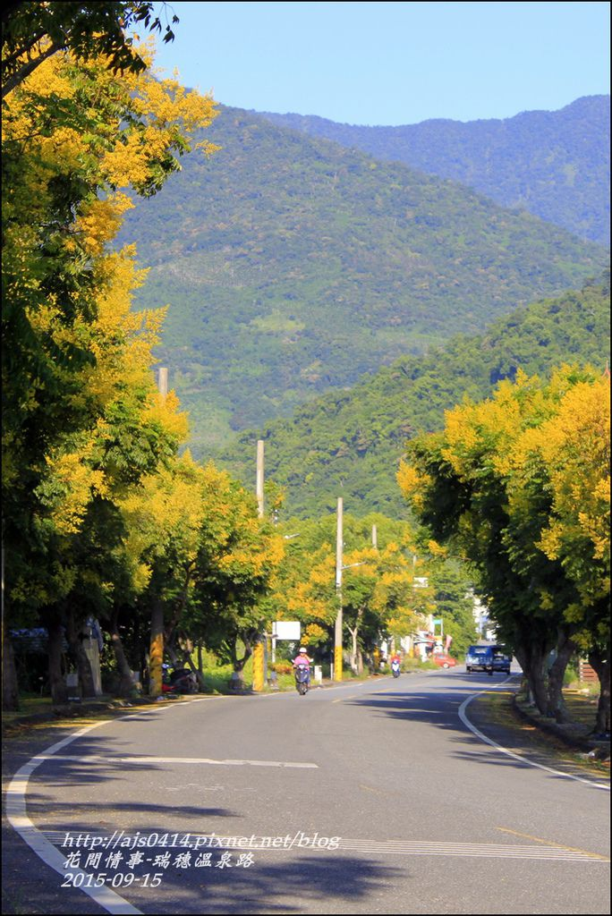 2015-09-溫泉路台灣欒樹1.jpg