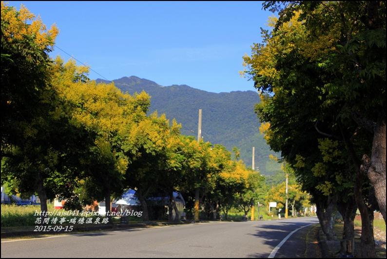 2015-09-溫泉路台灣欒樹5.jpg
