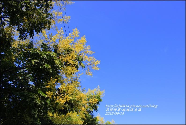 2015-09-溫泉路台灣欒樹6.jpg