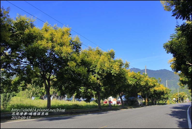 2015-09-溫泉路台灣欒樹9.jpg