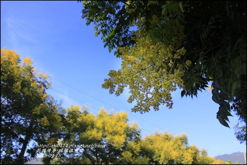 2015-09-溫泉路台灣欒樹8.jpg