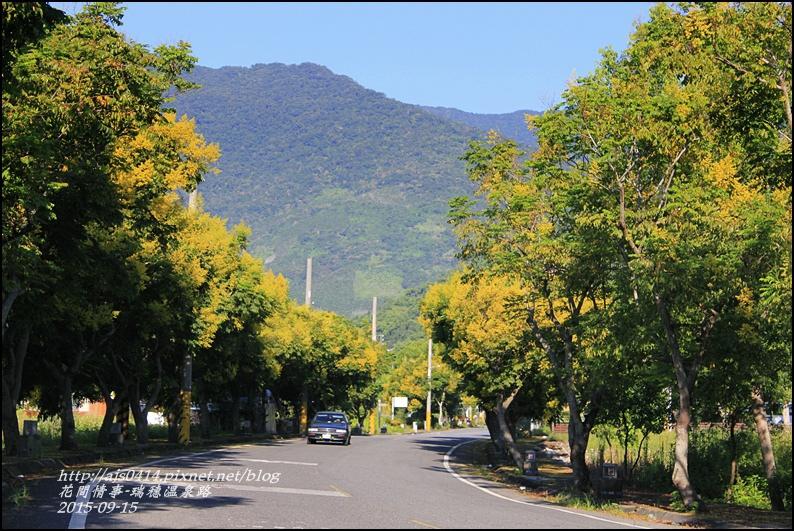 2015-09-溫泉路台灣欒樹17.jpg