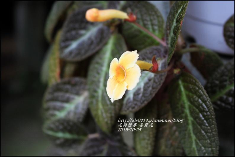 2015-10-喜蔭花6.jpg