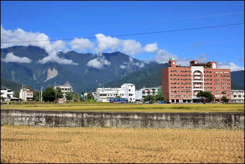 2015-11-池上金色大地11.jpg