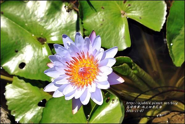 2015-11-池上四季花海5.jpg
